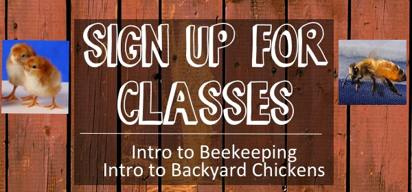 Class Sign Up