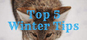 top-5-winter-tips1