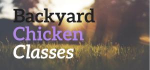 chicken-class